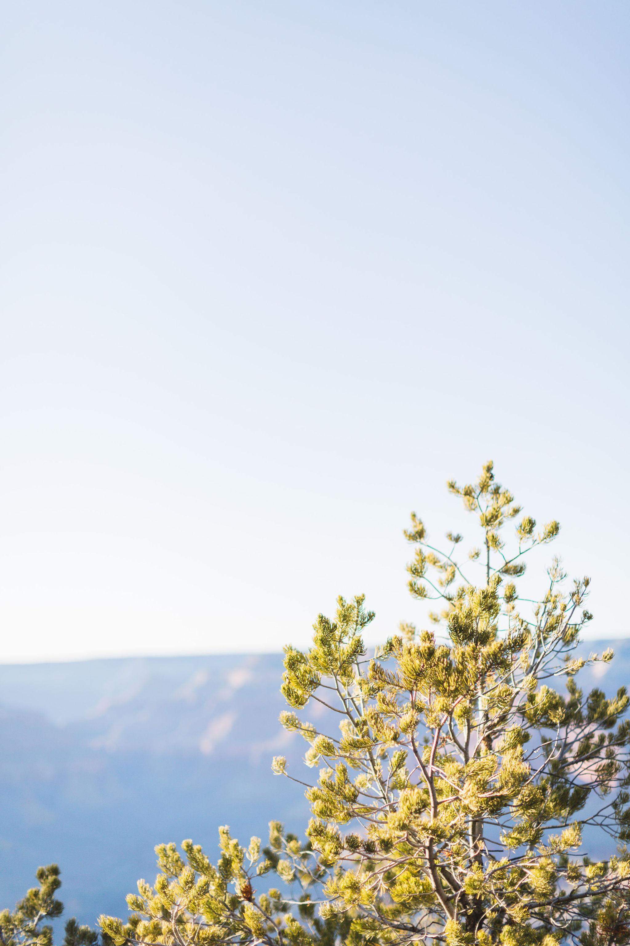 Christiana-David–Engagement-Zoe-Larkin-Photography-13