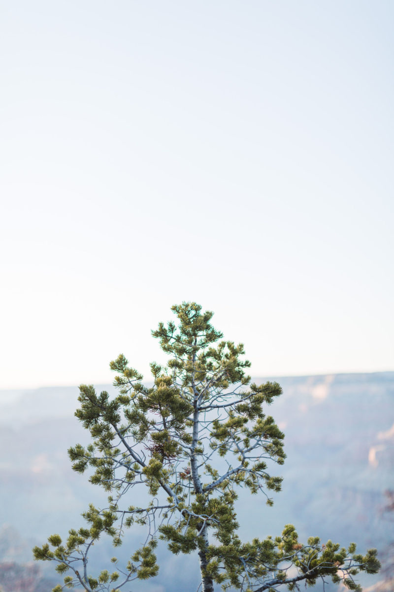 Christiana-David–Engagement-Zoe-Larkin-Photography-47